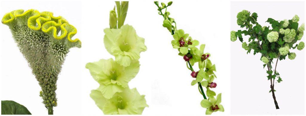 celosia, gladiola, dendrobium, viburnum