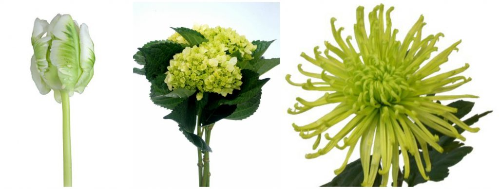 lalea, hortensie, crizantema